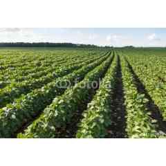 Smart Farm - Les solutions digitales Smart Farm permettent aux conseillers agricoles d'enrichir leur offre de conseil auprès des agriculteurs.   Basé sur des systèmes de traitement de données, elles permettent : > d'évaluer les performance technico-économiques d'une exploitation > de simuler son évolution à court et moyen terme > et d'accompagner les trajectoires de transition