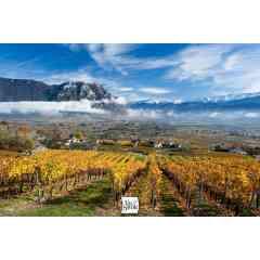 Vins de Savoie AOC - Les différentes appellations en Vins de Savoie : AOC Savoie (blanc, rouge) , AOC Roussette de SAvoie, AOC Crémant de Savoie.