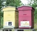 Adopter une ruche - <p>Adopter une ruche avec www.monmiel.fr c'est s'engager en faveur une ruche entière avec toutes ses abeilles.</p> <p>Chaque ruche est unique et personnalisée. Je choisis sa couleur et son nom inscrit au-dessus de l'entrée des abeilles.</p> <p>Je me régale du bon miel de ma ruche.</p>