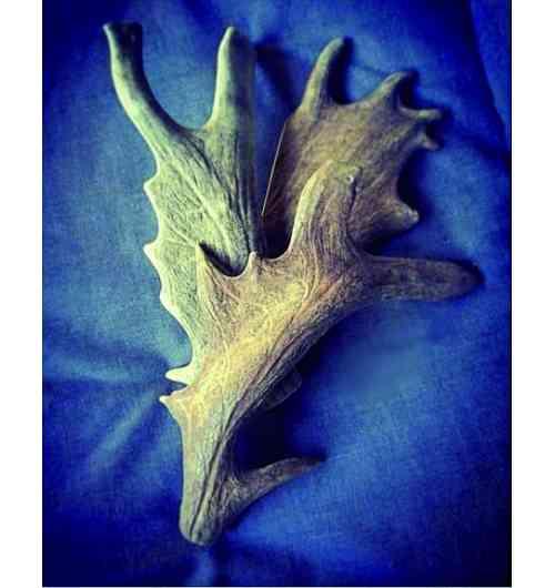BOIS DE DAIM A MACHER - Le bois de daim est la version plus tendre du bois de cerf à mâcher. Davantage préconisé pour les jeunes chiens ou chiens peu endurants à la mâche