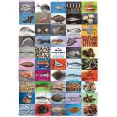 tous les produits de la mer