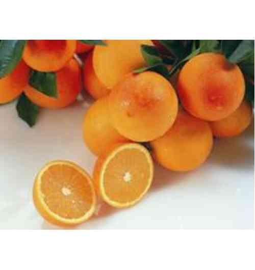 la maltaise de la Tunisie - L'orange Maltaise demi sanguine, est la variété qu'on associe le plus à la Tunisie qui en est le seul producteur et exportateur mondial. Réputée pour être « la Reine des Oranges ». Elle est considérée par les connaisseurs comme étant la meilleure orange douce au monde. Son calibre  moyen et sa forme légèrement ovale, son écorce qui se retire facilement, sa chair tendre et juteuse, sa saveur particulièrement agréable, sa douceur balancée par un bon niveau d'acidité font d'elle  une orange unique qui mérite bien sa renommée mondiale. Récolté à la main, la Maltaise de Tunisie  ne subit aucun traitement chimique après la récolte. Cette dernière commence généralement fin janvier début février et s'étend jusqu'à fin mars début avril. La Maltaise de Tunisie est un agrume produit uniquement en Tunisie. Véritable produit de terroir qui exprime ses qualités exceptionnelles essentiellement dans la presqu'île du Cap Bon et dans quelques zones chaudes du nord et du centre du pays.
