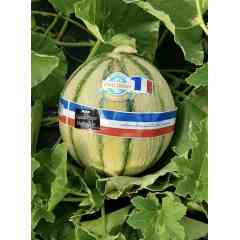 MELON CHARENTAIS PHILIBON - le meilleur melon charentais , c'est PHILIBON cultivé sur les meilleurs terroirs de france et d'outre -mer pour pouvoir vous satisfaire toute l'année il est gorgé de saveurs et répond aux exigences environnementales.
