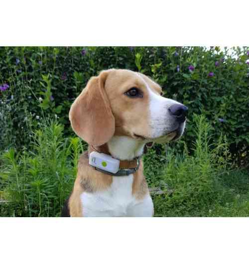 GPS Dogs2 - Un traceur GPS français, fiable, waterproof et léger. Il vous permettra de suivre votre chien partout sans limite de distance. De paramétrer des zones de confiance pour être averti en cas de sortie de territoire. Le traceur peut vibrer, sonner ou recevoir un appel voix pour éduquer son chien au rappel et écouter son environnement.