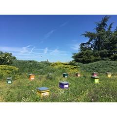 Adopter une ruche - <p>Adopter une ruche avec www.monmiel.fr c'est s'engager en faveur une ruche entière avec toutes ses abeilles.</p> <p>Chaque ruche est unique et personnalisée. Je choisis sa couleur et son nom inscrit au-dessus de l'entrée des abeilles.</p> <p>Je me régale du bon miel de ma ruche que je reçois chez moi à l'automne.</p>