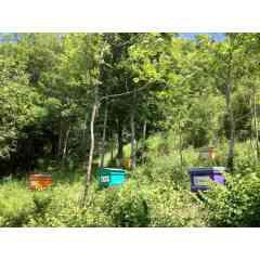 Adopter une ruche - Adoptez une ruche, personnalisez-la et recevez votre miel