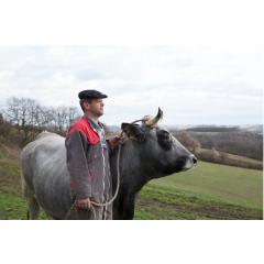 La Gasconne des Pyrénées - Il s'agit du premier Label Rouge « gros bovin » obtenu spécifiquement par et pour la Région Occitanie, en race rustique. Ceci est compréhensible quand on connait l'importance numérique et culturelle de la Gasconne dans la Région. La renommée de la Gasconne des Pyrénées s'est faite par le bouche à oreille entre amateurs éclairés et continue ainsi. L'animal revêtu d'une robe d'un beau gris argenté et arborant fièrement des cornes arquées vers l'avant, donne une viande aussi tendre que juteuse, intimement persillée, à la saveur délicate et au parfum incomparable.
