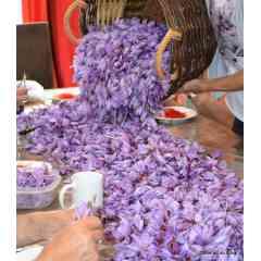 Safran du Stival : Safran et produits à base de Safran