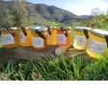 Le Rucher de Pouech - <p>Miel et produits dérivés</p>
