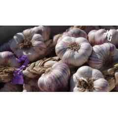 L'ail violet de Cadours - Premier AOP en France, il est reconnaissable à ses gros bulbes de forme arrondie et sa peau externe aux stries violettes (lie de vin). Ses caractéristiques sont liées au savoir-faire traditionnel des producteurs : choix de la parcelle et pelage manuel ainsi qu'au terroir de Cadours : sols argilo-calcaires, pic de pluviométrie au mois de Mai et séchage par le vent d'Autan. C'est un produit saisonnier car il ne subit pas de traitement anti-germinatif. Cru, il présente une odeur soutenue et un piquant au nez intense. Un goût et un arôme puissant en bouche. Cuit, son parfum alliacé en bouche apporte une légère impression de piquant avec une bonne persistance aromatique. Sa texture est moelleuse et sa saveur délicatement sucrée, ce qui lui donne une élégance en bouche.