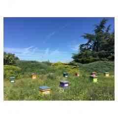 Adopter une ruche - Adopter une ruche avec www.monmiel.fr c'est s'engager en faveur une ruche entière avec toutes ses abeilles.  Chaque ruche est unique et personnalisée. Je choisis sa couleur et son nom inscrit au-dessus de l'entrée des abeilles.  Je me régale du bon miel de ma ruche que je reçois chez moi à l'automne.