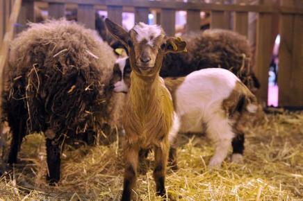 En savoir plus for Porte de versailles salon agriculture 2016